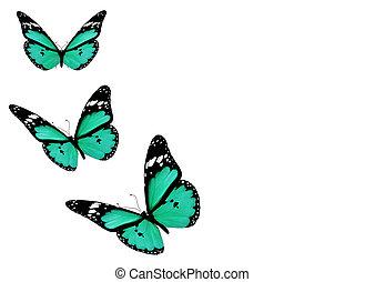 drei, blaues, vlinders, freigestellt, weiß, hintergrund