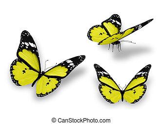 drei, gelber , vlinders, freigestellt, weiß