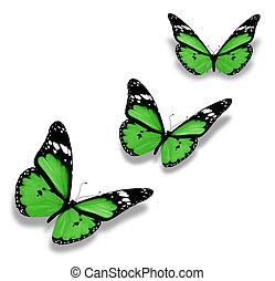 drei, grün, vlinders, freigestellt, weiß