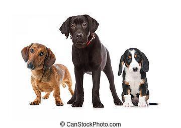 drei, hundebabys