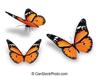 drei, orange, vlinders, freigestellt, weiß