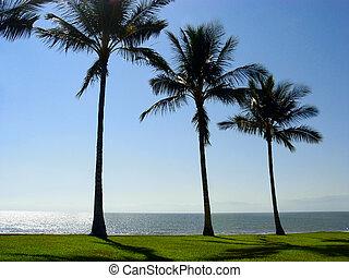 drei, palmen