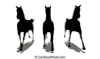 drei, pferden