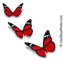 drei, rotes , vlinders, freigestellt, weiß