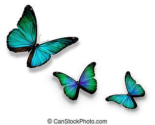 drei, türkis, vlinders, freigestellt, weiß