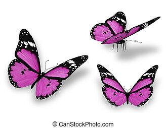 drei, violett, vlinders, freigestellt, weiß