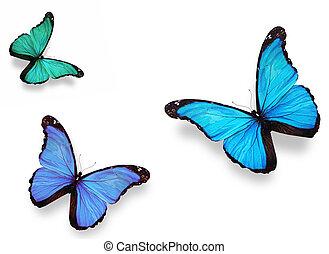 "drei, vlinders, ""morpho"", freigestellt, weiß"