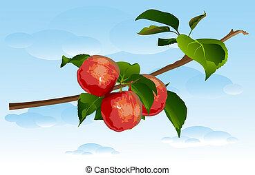 drei, zweig, äpfel