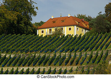 Dresden vineyard 02