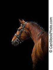 dressage, caballo, encima, un, negro