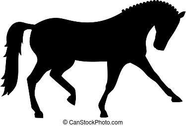 dressage, caballo