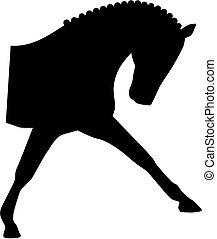 dressage, cabeza, caballo