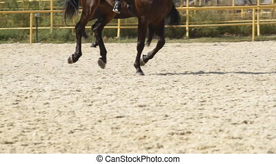dressage, chevaux