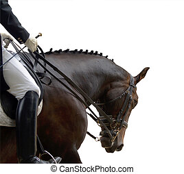 Dressage Competitor - Dressage horse in action during a...