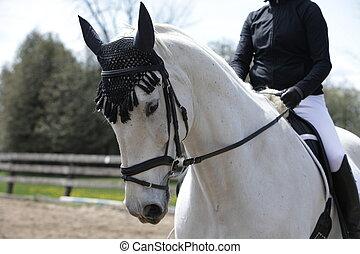 Dressage horse schooling