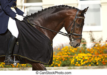 dressage horse and rider