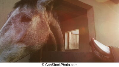 Dressage Horse waiting to be ridden - Front view close up of...