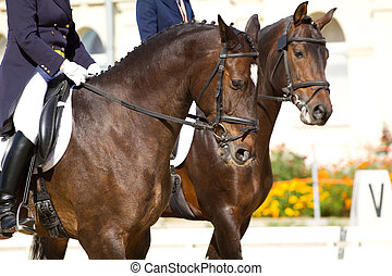 dressage horses and rider
