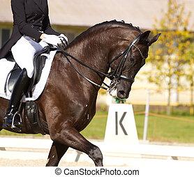 dressage, kůň