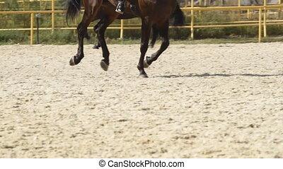 dressage, konie