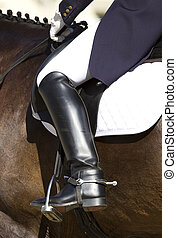 dressage, reiter, pferd