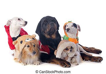 dressed dogs