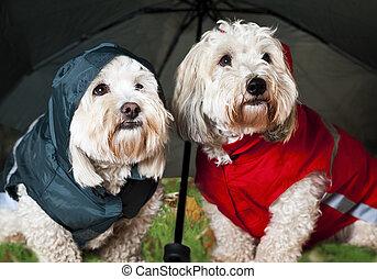Dressed up dogs under umbrella