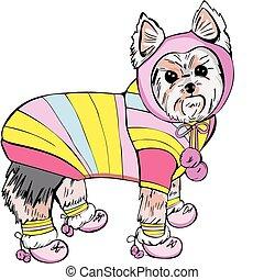 Dressed yorkshire terrier - The vector EPS illustration of...