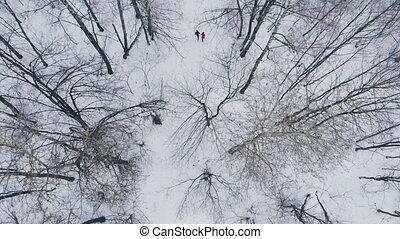 drewna, trening, lifestyle., pasaż, zima, zdrowy, rano, ich, kobieta, przez, człowiek, antena, jogging, health.