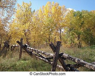 drewniany, kraj, płot