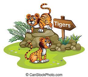 drewniany, tygrysy, dwa, strzała, deska