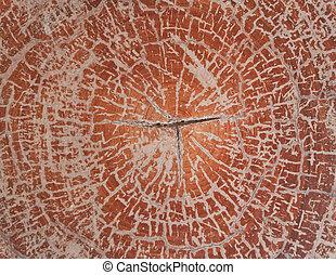 drewno, przekrój, struktura