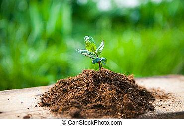drewno, roślina, pojęcie, stary, wiosna, młody, przeciw, tło., ekologia, kasownik