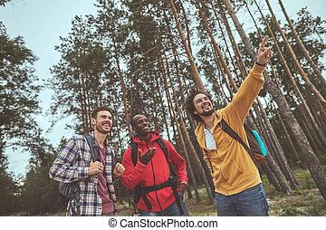 drie, bos, weg, bevinding, kerels, uit