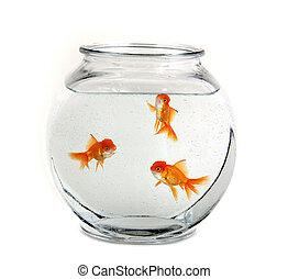 drie, goudvis, in, een, kom