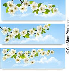 drie, lente, banieren, met, bloeien, boompje, brunch, met, lente, flowers., vector, illustration.