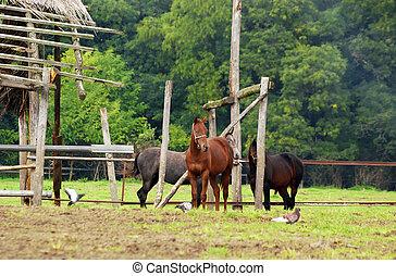 drie, paarde, in, wei