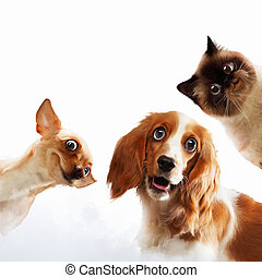 drie, thuis, huisdieren