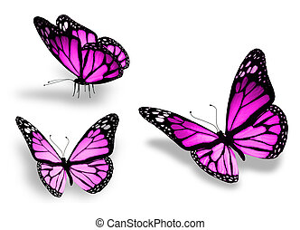 drie, viooltje, vlinder, vrijstaand, op wit, achtergrond