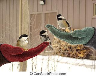 drie, weinig; niet zo(veel), vogels