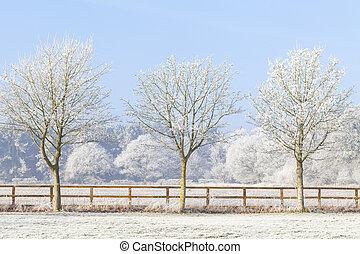 drie, winter bomen, en, bevroren, omheining