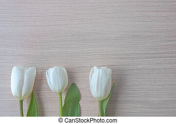 drie, witte , tulpen, met, groene, stammen, en, bladen, in een rij, bij de bodem van, de, image.