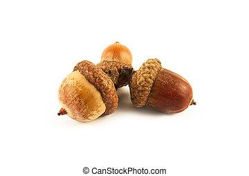 Dried acorns with oak leaf