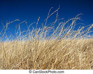 Dried alpine pasture
