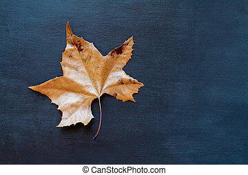 Dried Autumn Leaf Over Textured Black Blue Background