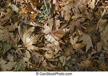 dried autumn leaves background. top view of mixed form.