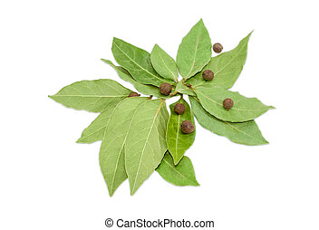 Dried bay leaf and allspice on a light background - Pile of...