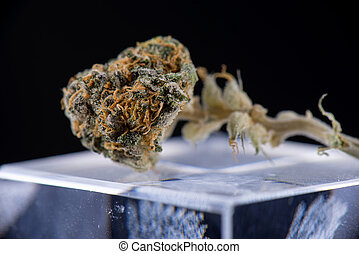 Dried cannabis bud (ambrosia strain) over reflective glass surface on dark background