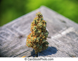 Dried cannabis bud (Congolese Strain) over wood texture - ...