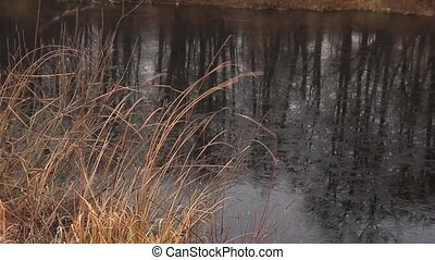 dried cattail and freezing lake - dried stalks of cattail...